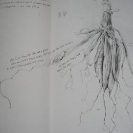 pencildrawing roots dahlia SH