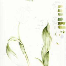 tulpblad